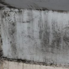 Springfield Mold Removal For Bathroom
